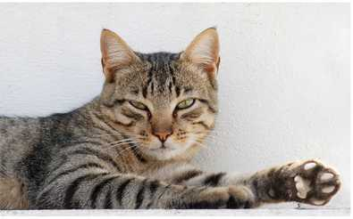 cat ailments and symptoms