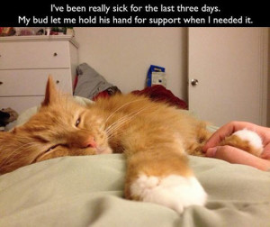 Cat Flu Remedies